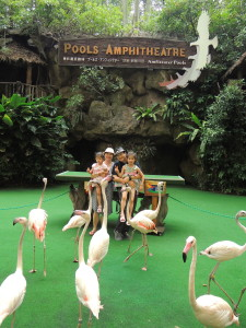 High Flyer Show of Jorong Bird Park in Singapore